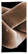 Knot In Human Hair, Sem Beach Sheet