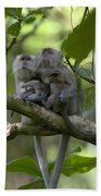 Long-tailed Macaque Macaca Fascicularis Beach Towel by Cyril Ruoso