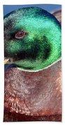 Mallard Drake Portrait Beach Towel