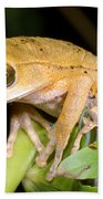 Marsupial Frog Beach Towel