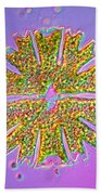 Micrasterias Beach Towel by Michael Abbey and Photo Researchers