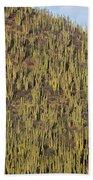Organ Pipe Cactus Stenocereus Thurberi Beach Towel