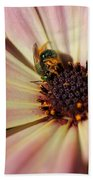 Osteospermum Named Sunadora Palermo Beach Towel