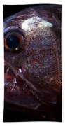 Pacific Viperfish Beach Towel