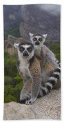Ring-tailed Lemur Lemur Catta Mother Beach Towel