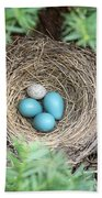 Robins Nest And Cowbird Egg Beach Towel
