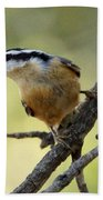 Rose Breasted Nuthatch Beach Towel
