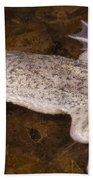 Sabana Surinam Toad Beach Towel