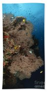 Sea Fans, Fiji Beach Towel