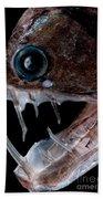 Sloanes Viperfish Beach Towel