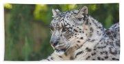 Snow Leopard Beach Sheet