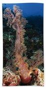 Soft Coral Seascape, Indonesia Beach Towel