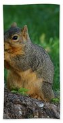 Squirrel Eating Beach Towel