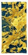 Staphylococcus Biofilm Beach Towel