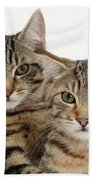 Tabby Kittens Beach Towel