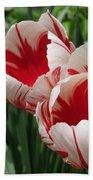 Triumph Tulip Named Carnaval De Rio Beach Towel