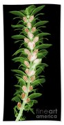 X-ray Of An Acanthus Flower Beach Towel
