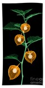 X-ray Of Chinese Lantern Plant Beach Towel
