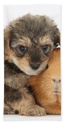 Yorkipoo Pup With Guinea Pig Beach Towel