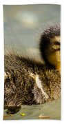 Young Duck Beach Towel