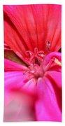 Zonal Geranium Named Tango Neon Purple Beach Towel