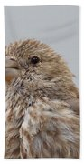House Finch Beach Towel