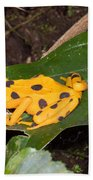 Harlequin Toad Beach Towel