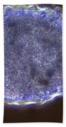 Amoeba Proteus Lm Beach Towel