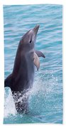 Atlantic Bottlenose Dolphin Beach Towel
