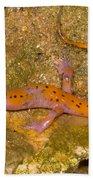 Cave Salamander Beach Towel by Dante Fenolio