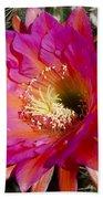 Dark Pink Cactus Flower Beach Towel
