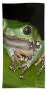 Giant Monkey Frog Beach Towel