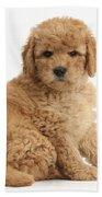 Goldendoodle Puppy Beach Towel