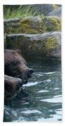 Grizzly Bear Or Brown Bear Beach Towel