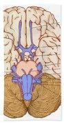 Illustration Of Cranial Nerves Beach Towel
