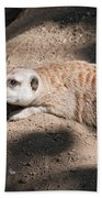 Meerkat Beach Towel