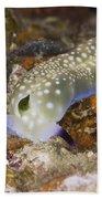 Nudibranch Feeding On Algae, Papua New Beach Towel