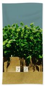 Photoperiodicity In Soybean Plants Beach Towel