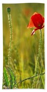 Poppies Beach Towel by Guido Montanes Castillo