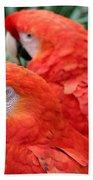 Scarlet Macaw  Beach Towel