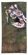Spotted Porcelain Crab Feeding Beach Towel