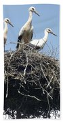 3 Storks In The Nest. Lithuania Beach Towel