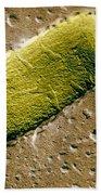 Tuberculosis Bacillum Beach Towel