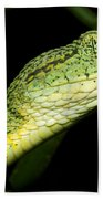 Two Striped Forest Pit Viper Beach Towel
