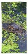 31- Alligator Hatchling Beach Towel