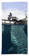 Whale Shark Feeding Under Fishing Beach Towel