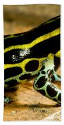 Amazonian Poison Frog Beach Towel