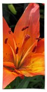 Asiatic Lily Named Gran Paradiso Beach Towel