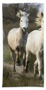 Camargue Horse Equus Caballus Group Beach Towel