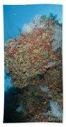 Colourful Reef Scene, Ari And Male Beach Towel